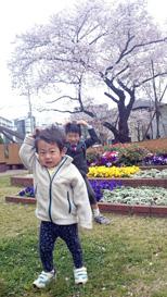 ひろと桜とランドセル;_9295.jpg